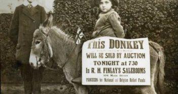 donkey-auction