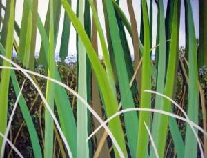 http://painterskeys.com/wp-content/uploads/2016/11/lorraine-duncan-art-grass_big-wpcf_300x229.jpg