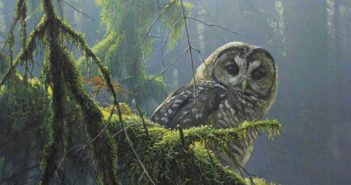 robert-bateman_mossy-branches-spotted-owl
