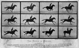 Sallie Gardner at a Gallop, 1878 photographs by Eadweard Muybridge (1830 - 1904)