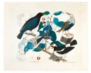 A Common Blackbird, A Red-Billed Starling, A Western Bluebird and a Pied Myna on a Branch of A Cherry Tree, 1856 Watercolor over pencil 45 x 45.5 cms by Aloys Zötl (1803–1897)