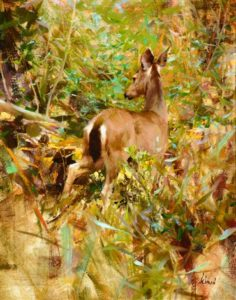 Mule Deer, 1987 Oil on canvas 20 x 16 inches by Richard Alan Schmid