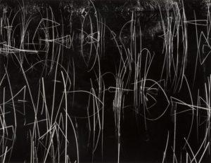 Reeds and Black Water, 1972 Gelatin silver, 1975 27 × 34.9 cm by Brett Weston